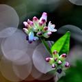 写真: 花が閉じる時