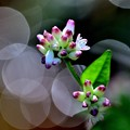 Photos: 花が閉じる時