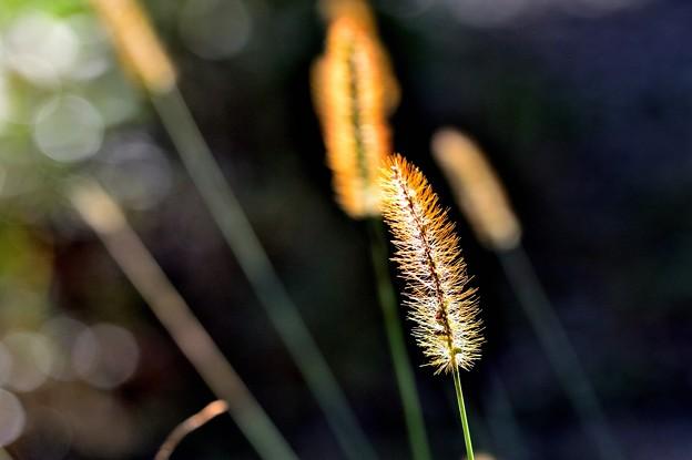 写真: 黄金