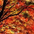 写真: 紅葉のトンネルにて