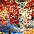 Photos: 紅と白
