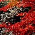 写真: 紅と白