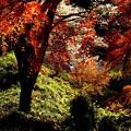 Photos: 桜モミジ