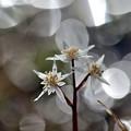 写真: 春の夢
