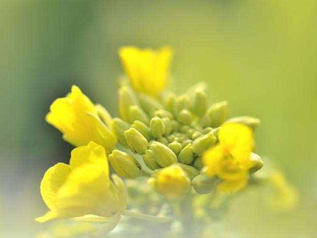写真: 春めく日差し