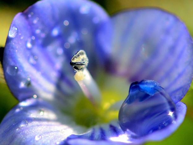 Photos: 青い瞳キラリ