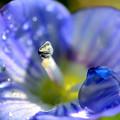 写真: 青い瞳キラリ