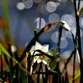 写真: 光りの降る日に