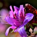 写真: 開花と言うより