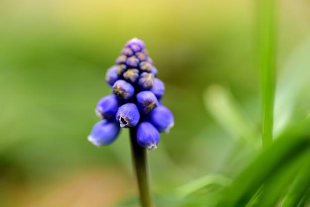 Photos: 春よ来い♪