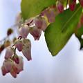 写真: 春は曙...
