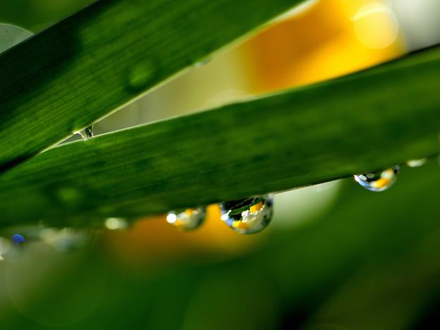 Photos: 雨に遊んで