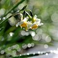 写真: 雨に遊んで