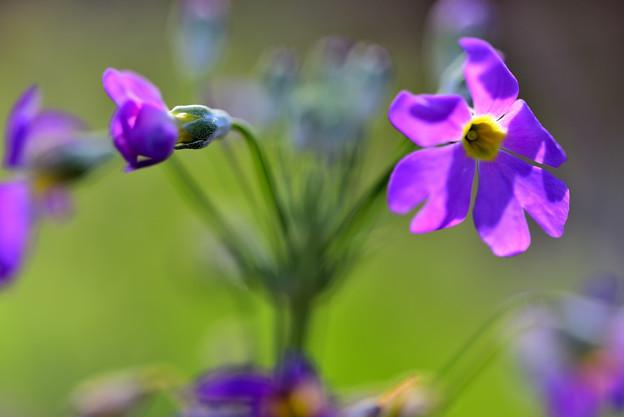 Photos: 花の形