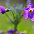 写真: 花の形