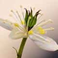 写真: 春の陽求めて