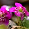 蕾から花へ