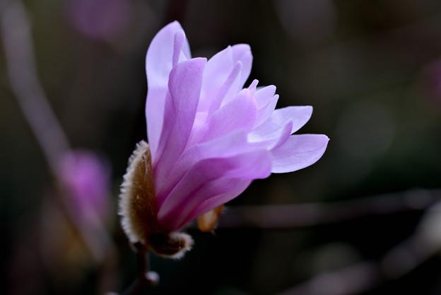 Photos: ピンクの輝き
