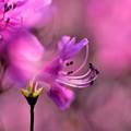 Photos: 紫の輝き