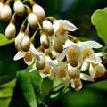 Photos: たまご型の花
