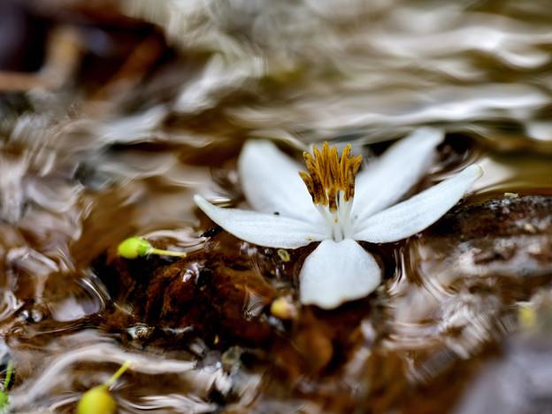 Photos: 花の行方