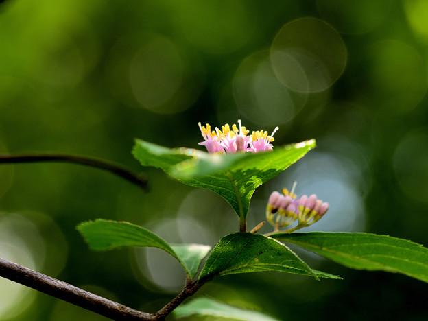 Photos: 花を乗せて