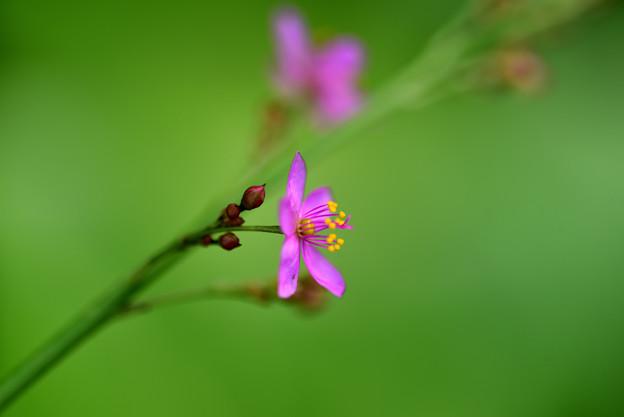 名前の多い花