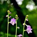 Photos: 日陰に咲く