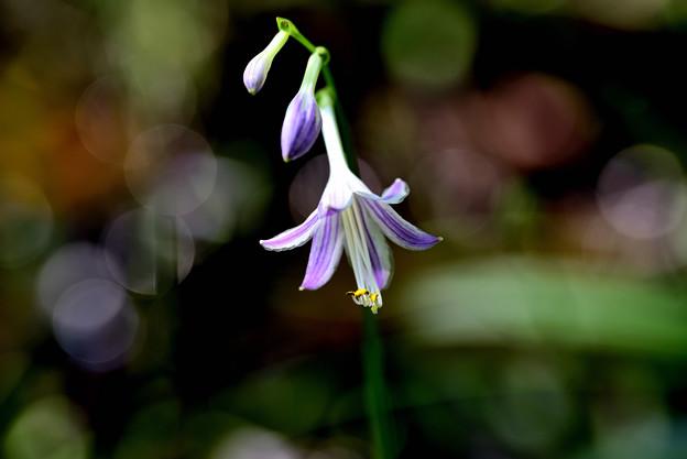 Photos: 今咲いてます