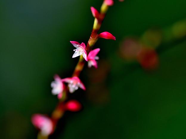 Photos: 紅白
