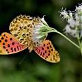 Photos: 蝶が集う花