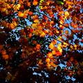 写真: 層雲峡の紅葉