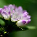 写真: 花束のように
