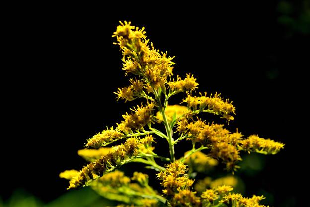 Photos: 黄色と黒