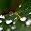 Photos: 雨上がりに