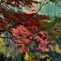 湖面のキャンバス