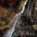 Photos: 虹の滝