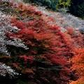 Photos: 秋の彩