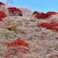 Photos: 赤と白