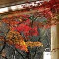 窓の外は秋