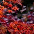 Photos: 秋の夕日に~~♪
