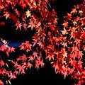 Photos: 紅の舞