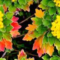 Photos: 葉がメインで