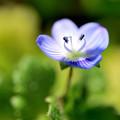 Photos: 花の暦