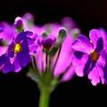 Photos: 春を夢見て