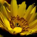 Photos: 賑やかな蕊