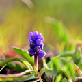 Photos: 紫のたまご