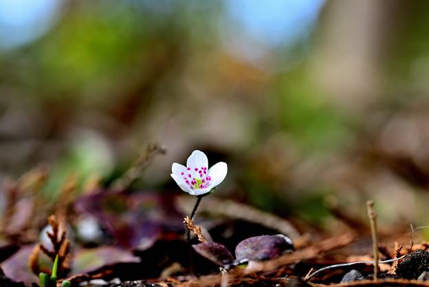 Photos: 春の野に
