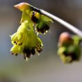 Photos: 春の花が続々と