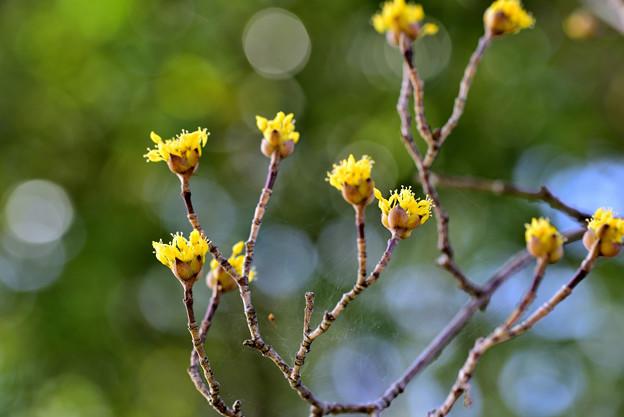 旬の花たち